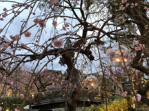 北野天満宮で観梅 ろうそく灯る梅苑 2021年3月6日