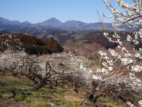 一足早い春を求めて上州路へドライブ(^_^)