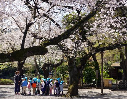 春が来た(靖国神社から江戸城北の丸公園へ)