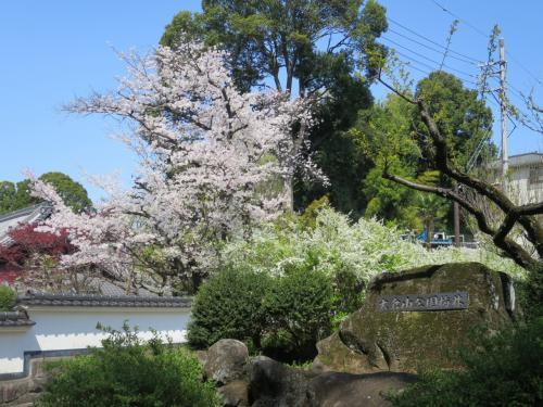 横浜・大倉山公園 桜と春の花