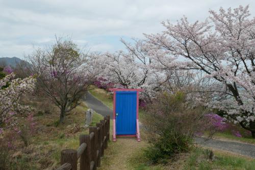 伯方島から多々羅大橋までサイクリング、桜満開!どこでもドアもありました?!