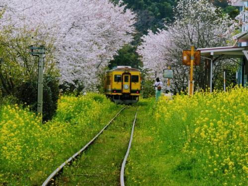 うちぼーそとぼーちちぼー、呪文を唱えて菜の花色の列車に乗ろう!