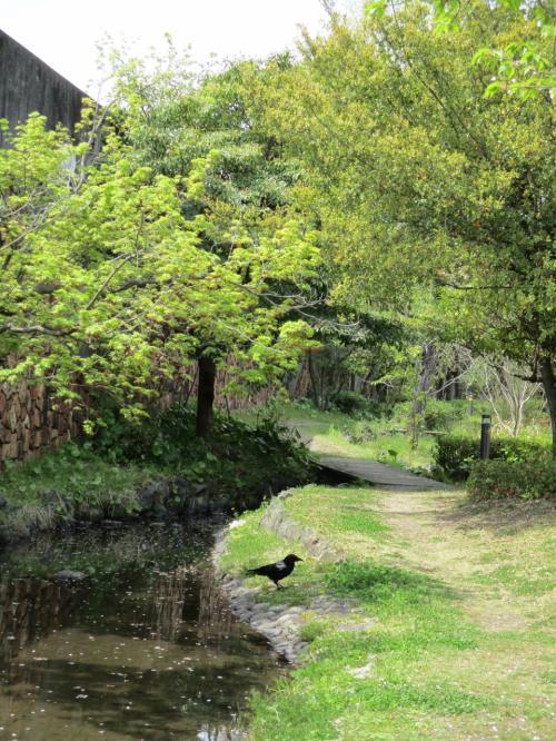 お散歩に行きます。川島ビオトープ(別山二号公園、さくら公園)の場所目指してです(2021年)