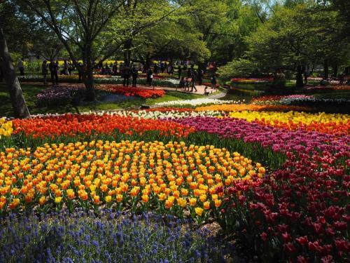 国営昭和記念公園のチューリップが満開!