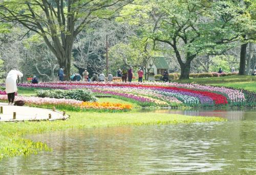 Japan 再開した昭和記念公園でチューリップを楽しむ(前半) ~ミツバチばあやの冒険~