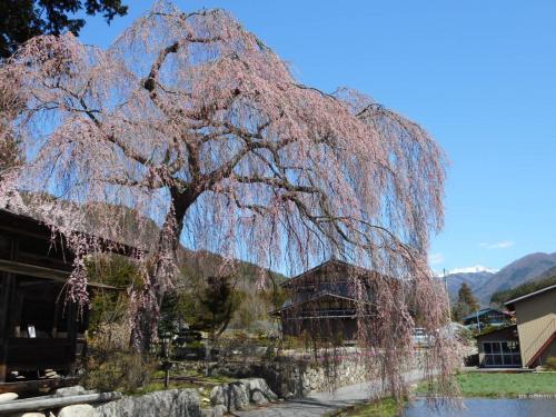 癒しの旅 下呂温泉とちょこっと飛騨高山へ 春のさくら満開編