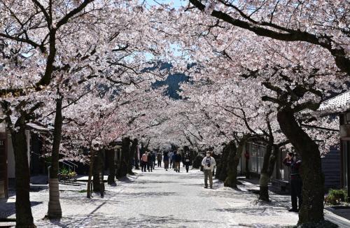 真庭・新庄「最後の」ひとつきの桜めぐり