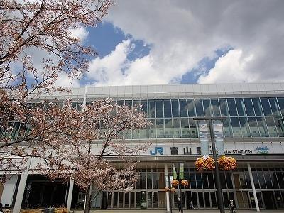 [1]観桜の富山. 松川ならず、舟川『春の四重奏(カルテット)』■初日