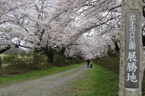 北東北の桜巡り ① ~北上展勝地と盛岡城址公園