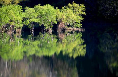 ◆幽玄の水鏡~白川ダム湖の水没林 ①