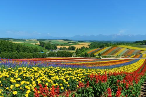 夏休み!北海道旅行~星野リゾートに泊まって雲海、花畑、旭山動物園を巡る
