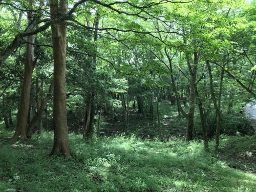 箱根の静かな旅(ポーラ美術館と山のホテルを中心に)