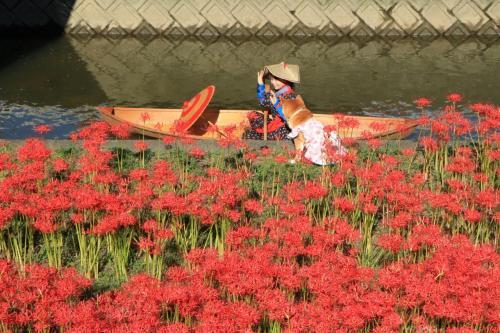 逢妻女川が紅に染まるとき♪ モデル撮影&またまた奇跡的に出会った笑うワンちゃん♪ 三日間の記録