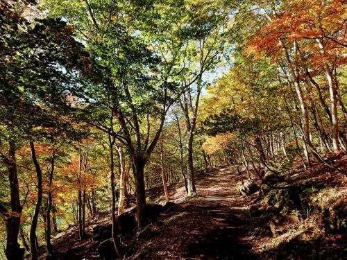 紅葉の志賀高原「サンシャイントレイル」ハイキング
