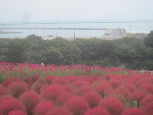 ひたちなか海浜鉄道に乗ってコキアを見に行く 那珂湊でも途中下車