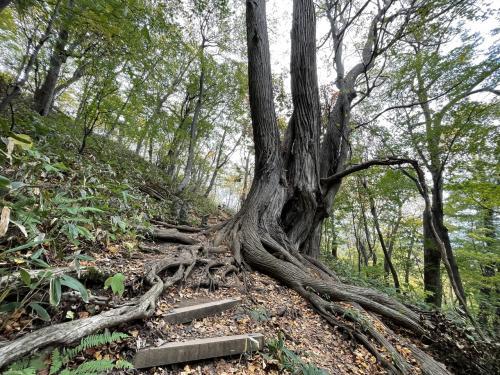 円山登山 はたして森のクマさんはどこにいるのか