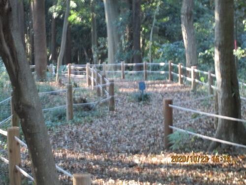流山市の大畔・大畔の森・半分公開・初石5号公園