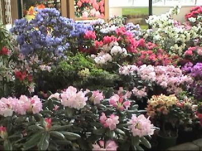 『ナショナル 石楠花 ガーデン』 タンデノン丘陵