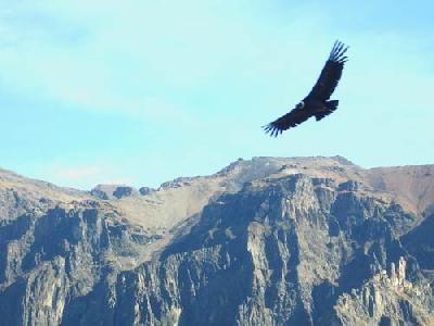 リアルタイム旅行記 南米放浪2人旅▼~第12便コンドルの飛ぶ谷