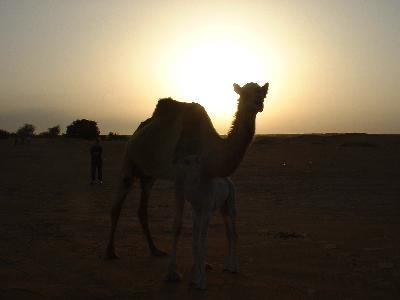 UAE/ドバイワールドカップと砂漠でアラビアンナイト!?@ヒルトン(2002年3月)