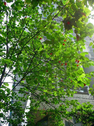 中国・重慶の植物と花