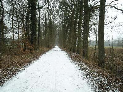 ドイツ冬の森