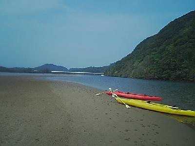 日本のガラパゴス!西表島へいざ!
