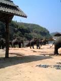 タイ 象に乗りに行くゾゥ~!? 4日目