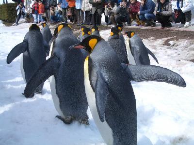 雪どけの旭山動物園