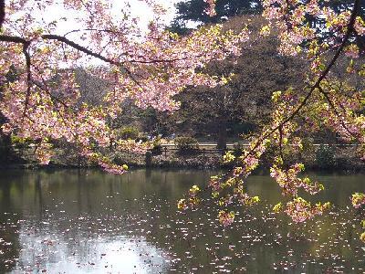 ◆2005年3月◆東京都~新宿御苑~◆