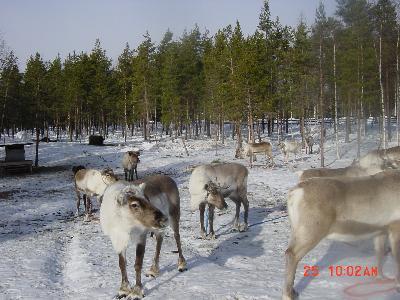 フィンランドの旅 《ラップランドとヘルシンキ》 その1