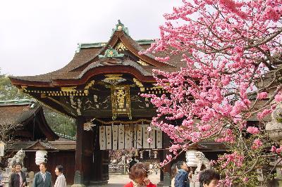 まだ梅が咲いてるし!@北野天満宮☆2005年4月3日