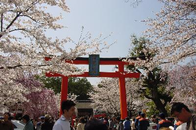 平野神社~2005年4月9日~満開の桜を楽しむ♪