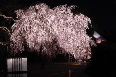 幽玄の世界へ♪@二条城ライトアップ☆2005年4月16日