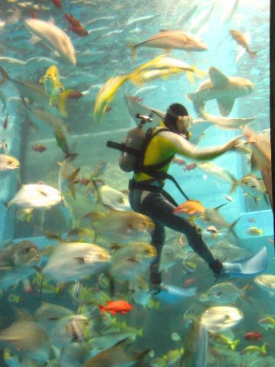 躍動する海の生き物たち☆八景島シーパラダイスで