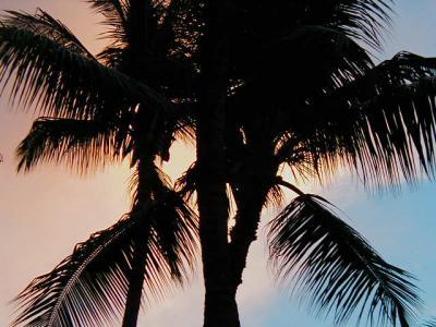 【再編集中】19th:ハワイ12日間~4度目にして初マウイ~(Part8:定番観光編)
