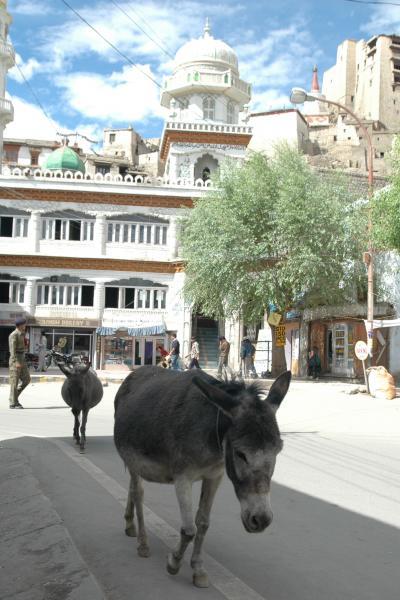 インドの中のチベット、ラダックの旅 ?(レー編)