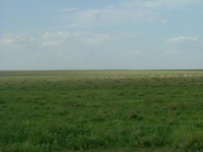 草の海・地平線・最果て・ガゼルと白鳥の群れ