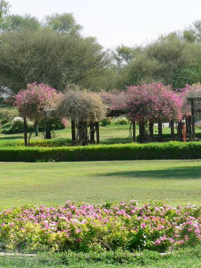 アラブ首長国連邦(U.A.E.)の旅【3】 オアシスに咲く花が美しい街 アル・アイン