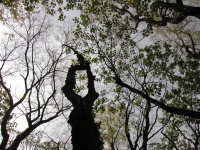 2002年4月27日五箇山・荘川桜 その3(中部北陸自然歩道)
