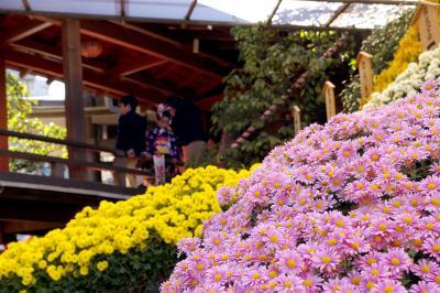 菊祭りと七五三で賑わう湯島天神