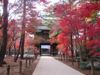 平林寺の紅葉を訪ねて