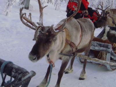 北欧のリゾート・サーリセルカへ行く旅?