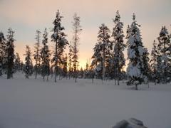 オーロラ見えたか?! (Part3) フィンランド(3日目)
