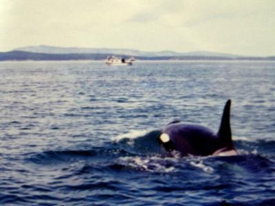 オルカに会いにビクトリアへ