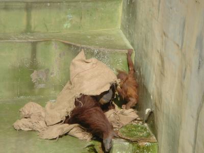 豊橋動植物園と足助の雛まつり