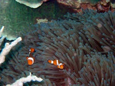 ティオマン島でダイビング