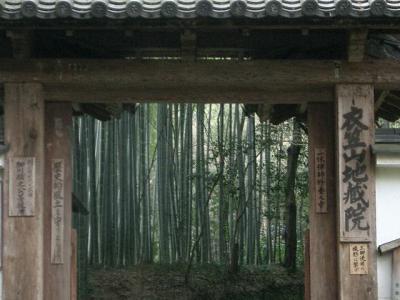 竹と梅を一日で。地蔵院、梅宮大社、北野天満宮。