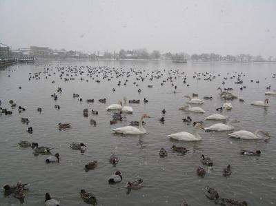 水原の瓢湖
