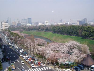 あっという間に満開!半蔵門の桜